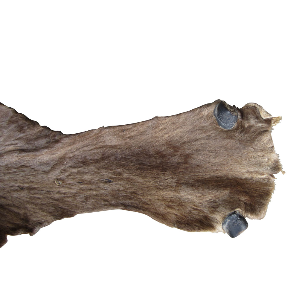 A Water Buffalo Hide Approximately Seven Square Feet. This Hide Is In Great  Condition The Skin Has Been Tanned Into Leather With The Hair On It.